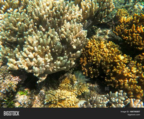 Finger Coral Is A Very Common Type Of Coral On Barrier