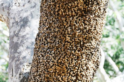 Fear of Holes Trypophobia Clusters