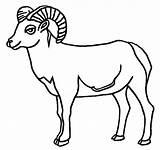Sheep Bighorn Coloring Drawings 01kb 612px sketch template