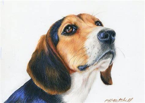 images  colored pencil art  pinterest