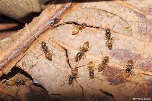 Common Ants of Karnataka: Part 1 | JLR Explore