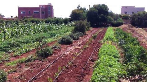 terre et humanisme maroc maraichage 224 dar bouazza