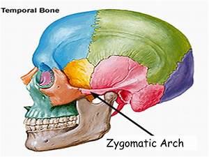 Zygomatic Arch – defenderauto.info