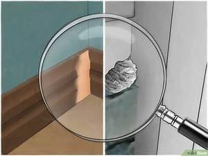 Maus In Wohnung : m use auf nat rliche art loswerden wikihow ~ Markanthonyermac.com Haus und Dekorationen