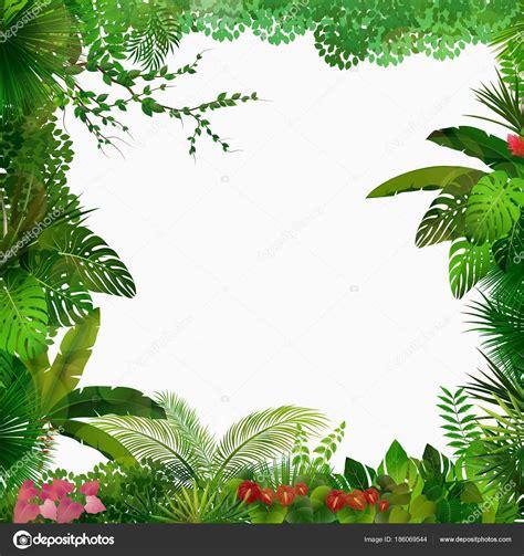 foto de Ilustração Vetor Floresta Tropical Fundo Branco Vetor de