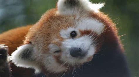Lista De Los 10 Animales Mas Lindos Del Mundo Para