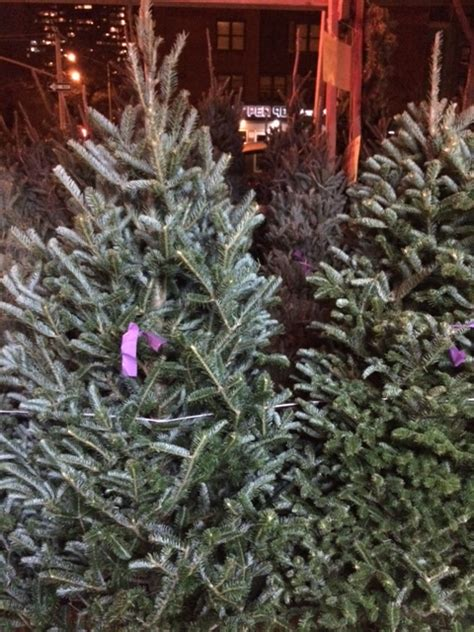 where to buy the best trees in new york city access nyc