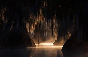 Nature, Landscape, Swamp, Trees, Mist, Sunlight, Morning, Dark, Calm, Wallpapers, Hd, Desktop, And