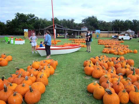 Tufco Flooring Delmarva Inc by 100 Best Pumpkin Patch Top 10 Pumpkin