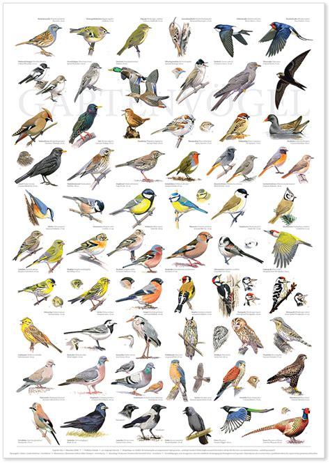 gartenv 246 gel garden birds vermischtes pinterest