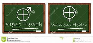 Mens Womens Health Classroom Board Stock Illustration ...