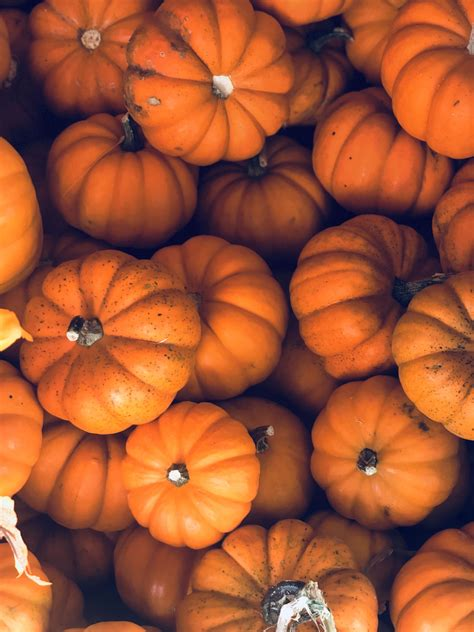 Pumpkin Fall Backgrounds Laptop by Aesthetic Fall Background Fall Backgrounds In 2019