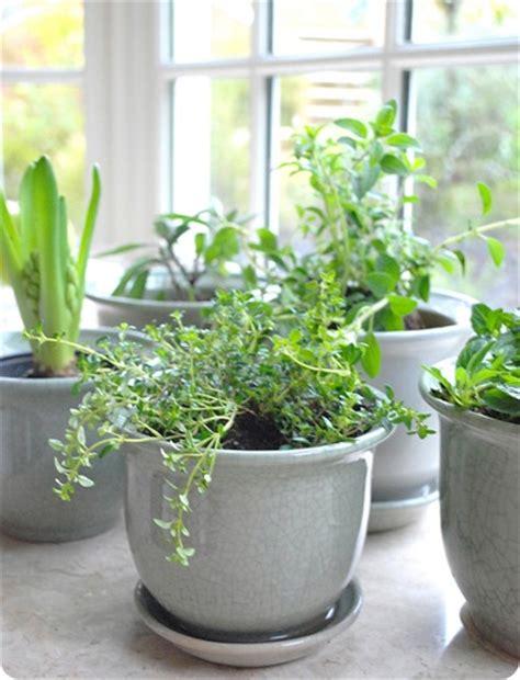 Happiness Is An Indoor Herb Garden  Centsational Girl