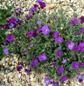 Purple Flowers Names