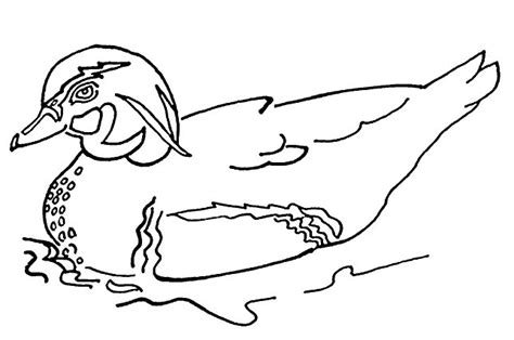 duck coloring pages coloringpagescom