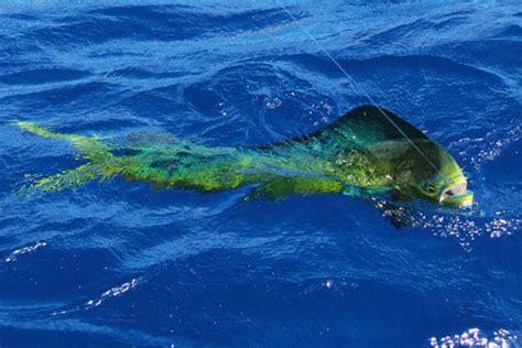 Tonga and Vavau - The Fishing Website