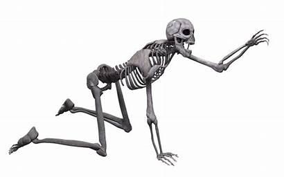 Skeleton Transparent Clipart Human Skull Clip Pluspng