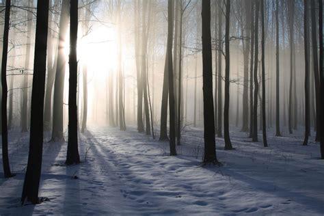 image de chambre romantique foret d 39 hiver décoration murale tableau nature en hiver