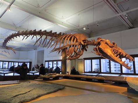 filebasilosaurus isis fossil nantes history museum
