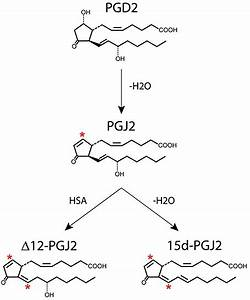 Generation Of J2 Prostaglandins  Pgj2 Is Generated By Non