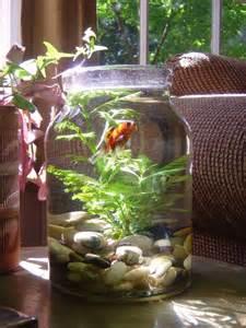 diy creative aquarium decorations for homes nationtrendz