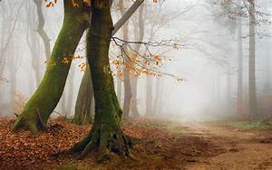 Mist, Nature, Landscape, Morning, Trees, Path, Forest