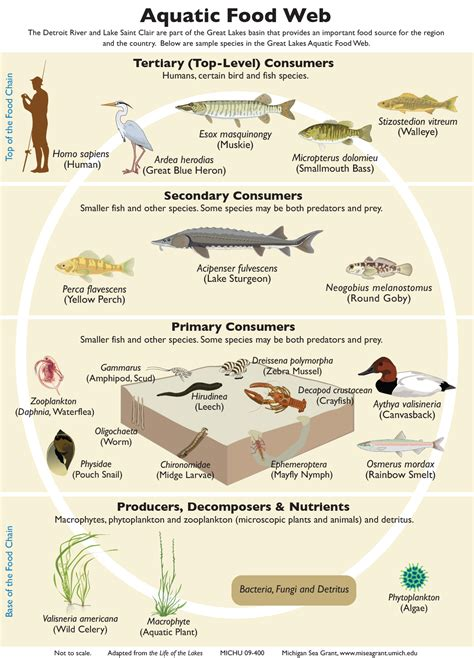 web cuisine aquatic food web pictures to pin on pinsdaddy