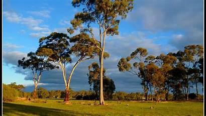 Bush Australian Glory Landscape Wallpapers Background Desktop