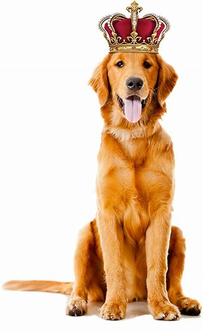 Crown Dog Pricing Services Canine Mobile Regal