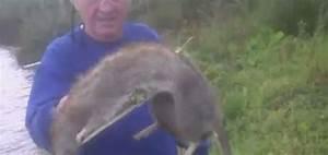 Comment Tuer Un Rat : comment tuer les rats taupier sur la france ~ Mglfilm.com Idées de Décoration