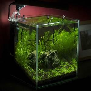 60 Liter Becken : nano aquarium tipps ~ Michelbontemps.com Haus und Dekorationen