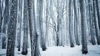 Forest Winter Snow Trees 4k Wallpapers Nature
