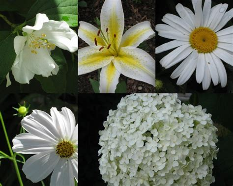 Plants With White Flowers Perennials, Annuals, Bulbs, And