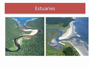 Abiotic and Biotic Factors in Estuaries