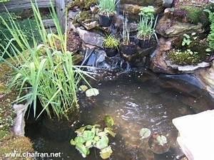 Plante Pour Bassin Extérieur : bassin d 39 eau construction ~ Premium-room.com Idées de Décoration