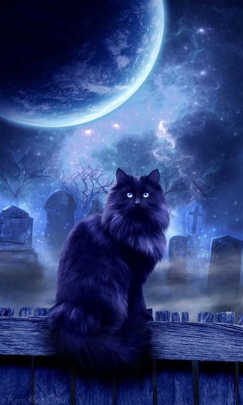 mystic cat pictures   images  facebook