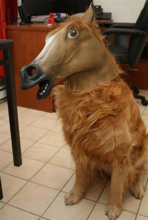 horses dogs equestrian horse dog looks theverybesttop10