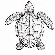 Best Turtle Drawing Ideas And Images On Bing Find What You Ll Love