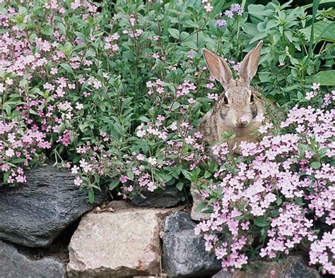 retardant plants editors picks top rabbit resistant plants
