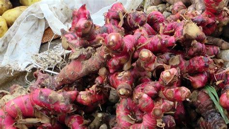 6 cara praktis menanam jahe bisa di dalam pot, polybag atau di lahan terbuka jahe adalah tanaman rimpang yang sangat terkenal sebagai bahan manfaat jahe untuk kesehatan dan kecantikan berikut 6 tahap menanam jahe 1. 5 Cara Menanam Jahe Merah Di Tanah yang Benar