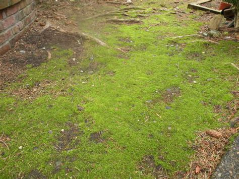 Top 3 Reasons Moss Grows In A Lawn
