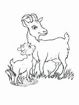 Goat Billy Goats Gruff Coloring Drawing Pages Three Cute Drawings Printable Getcolorings Paintingvalley Getdrawings sketch template