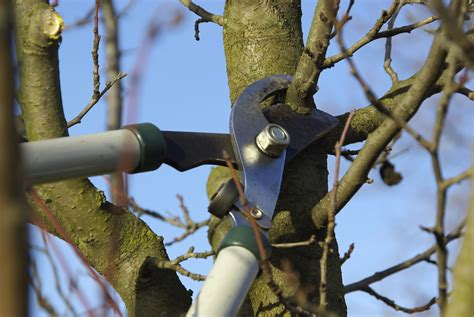 pruning trees best time for pruning fruit trees how to prune a fruit tree