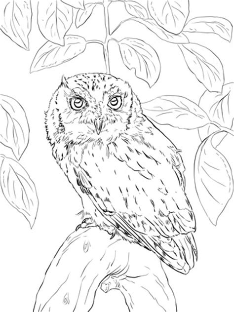 eastern screech owl coloring page  printable