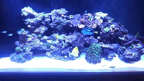 saltwater aquascape 90 gallon reef build aquascape update 9