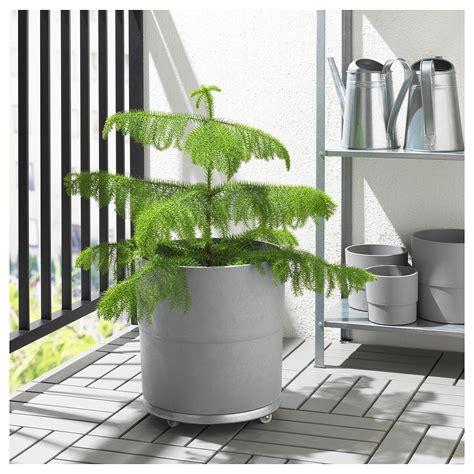 NYPON นีพปอน กระถางต้นไม้, ใน/นอกอาคาร เทา, 32 ซม. - IKEA