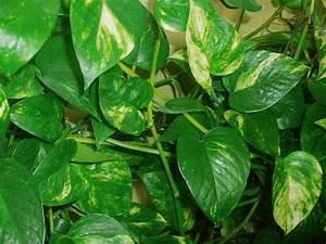 Schnell Rankende Pflanzen : rankende pflanzen f r den balkon pflanzen f r nassen boden ~ Frokenaadalensverden.com Haus und Dekorationen