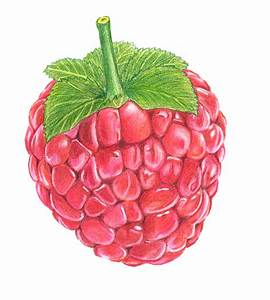 Raspberry Fruit Drawing | www.imgkid.com - The Image Kid ...