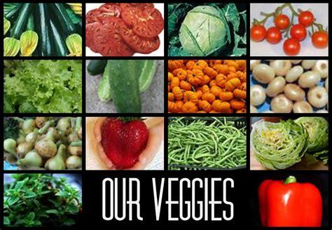 garden vegetables list vegetable gardens nikitaland