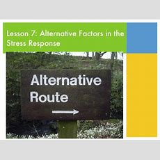 Lesson 7 Alternatives Factors To The Stress Response